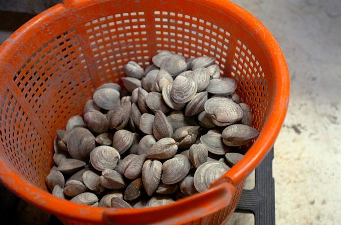 basket-of-nj-clams-photo-by-ben-fogletto